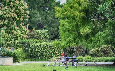 What to See at the Gold Coast Regional Botanic Gardens
